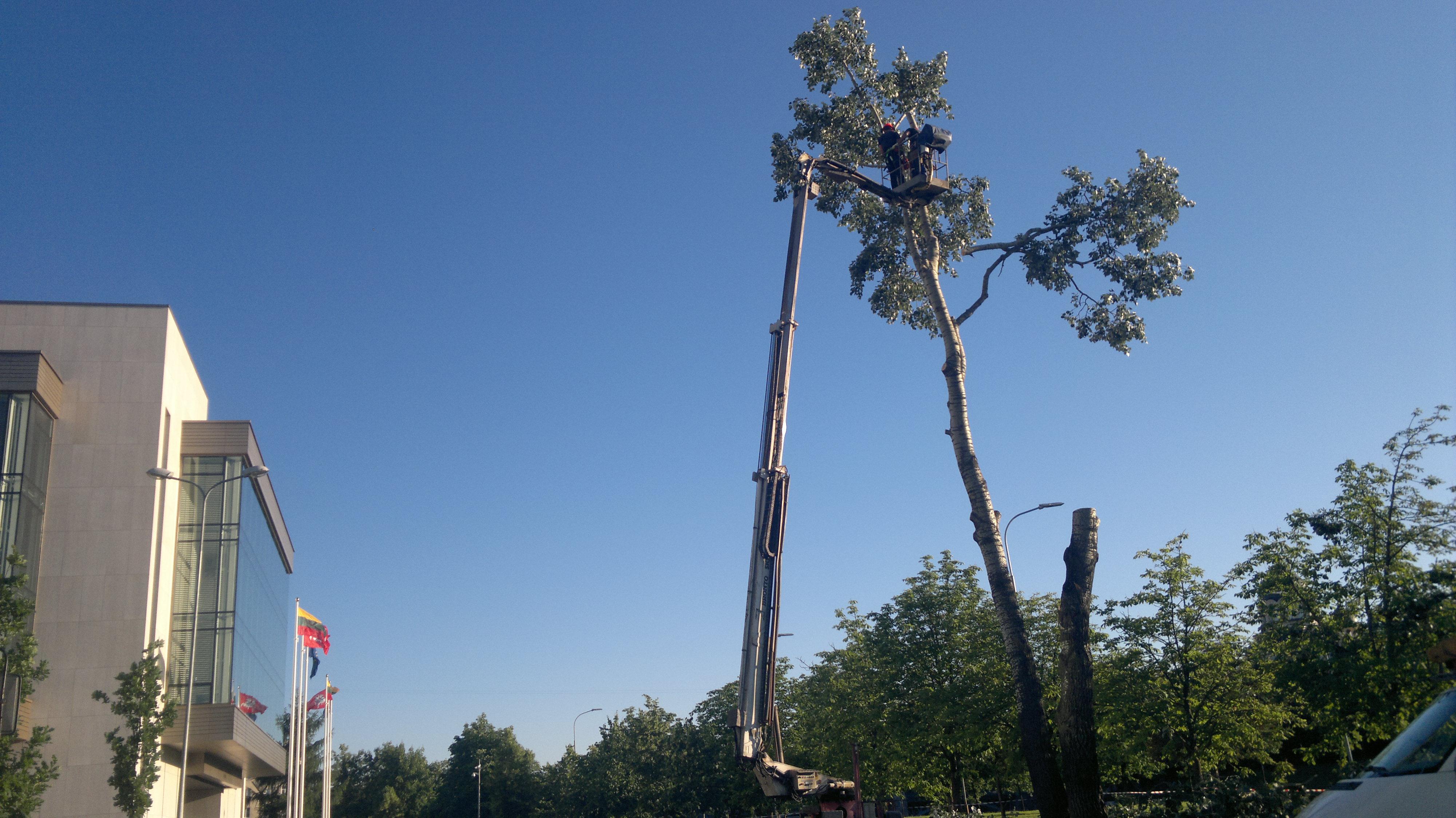 Pavojingas-medis-046