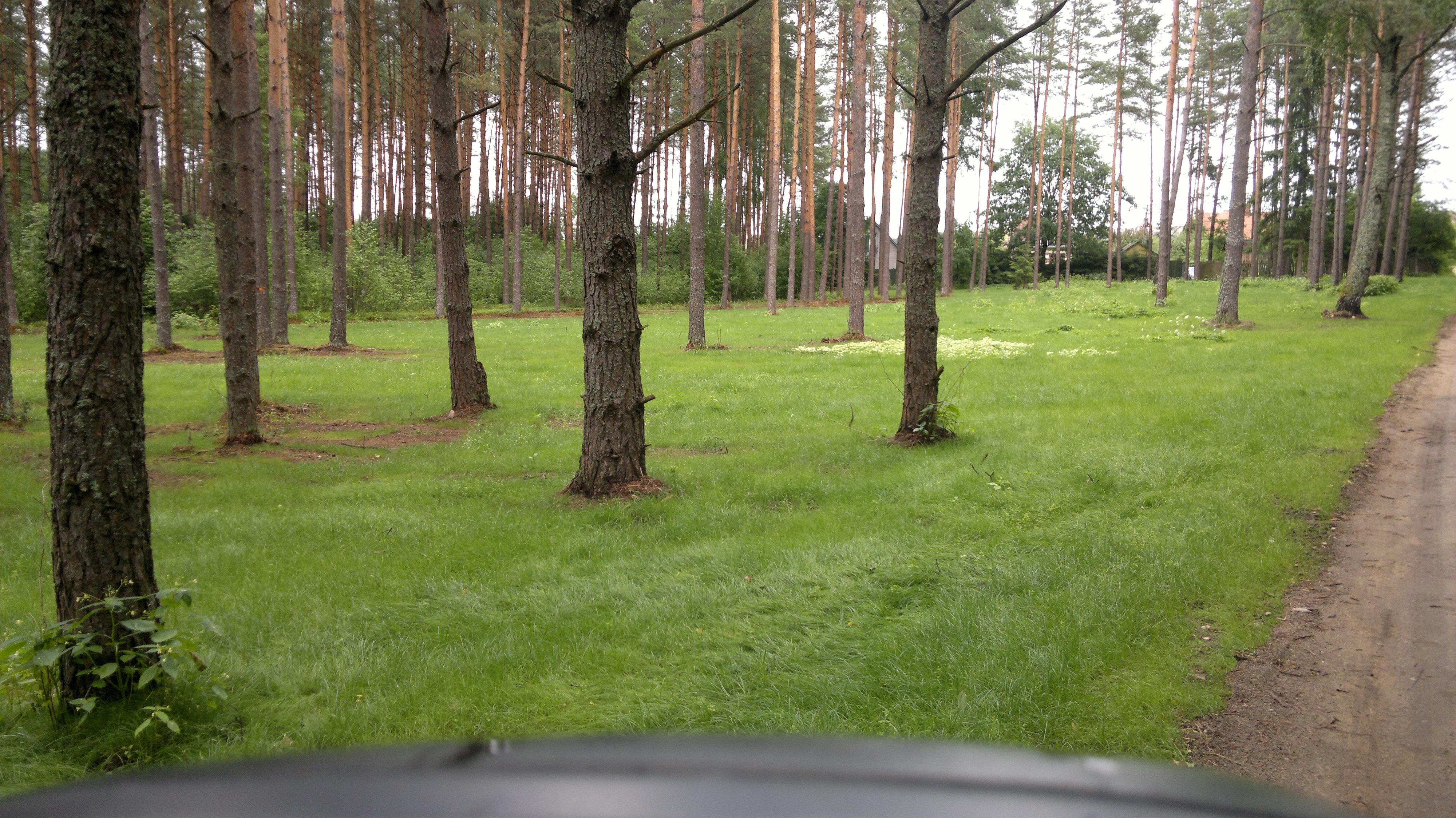 Parkas