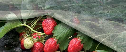 velo-protettivo-per-frutti-e-ortaggi